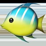 тропическая рыба