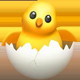 Вылупленный цыплёнок